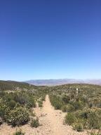 KM 66 – 110: Der Trail spricht mit dir